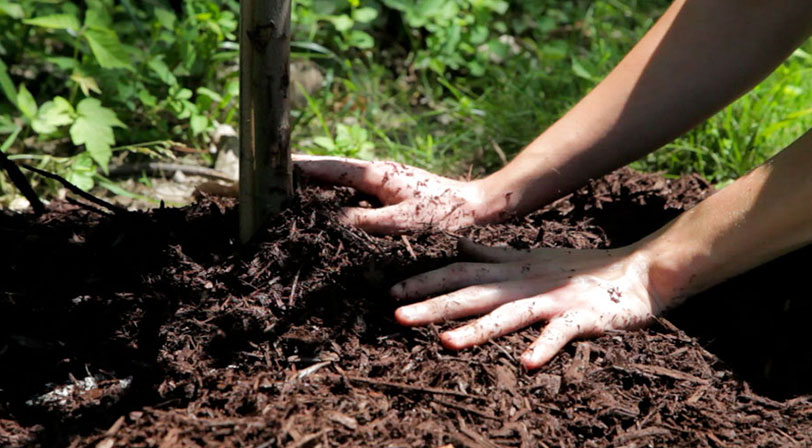 planting a tree banner 3
